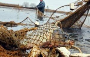 Про рыбные запасы из уст браконьера