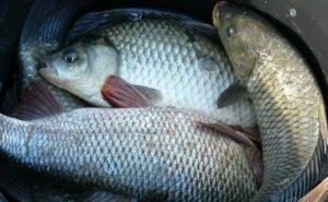 Крутые лайфхаки для рыбалки