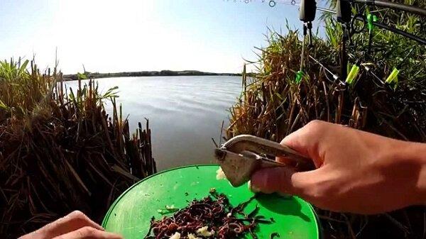 приготовить прикормку для рыбы дома