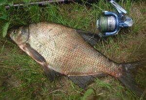 Рецепты злаковых миксов для удачных рыбалок на леща