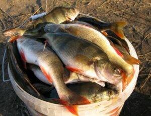 Рыболовам-любителям установили лимиты