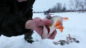 А мертв ли рыболовный сезон в феврале?