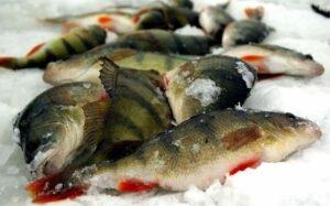 Хитрости поиска рыбы на зимнем водоеме
