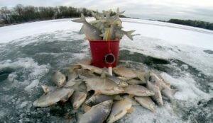 Какую рыбу и как приманивать к своей лунке
