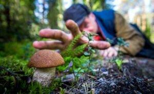 В Госдуме обсудят правила сбора грибов и ягод