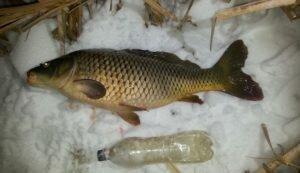 10 Советов рыболовам для ловли карпа со льда