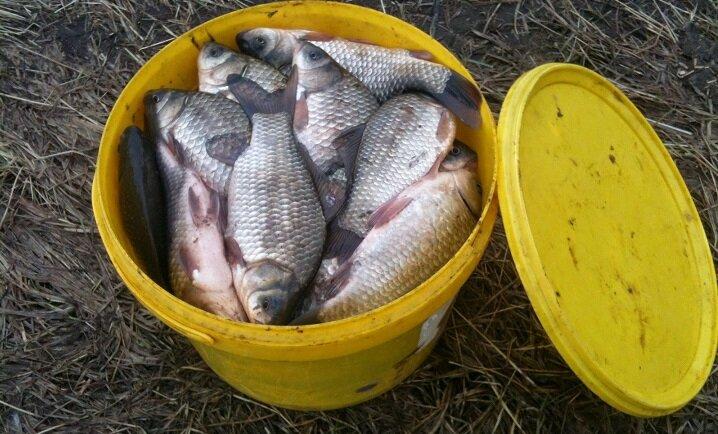 Простая деревенская прикормка. Рыбу приманит, как магнит